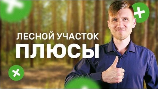 Плюсы аренды лесного участка