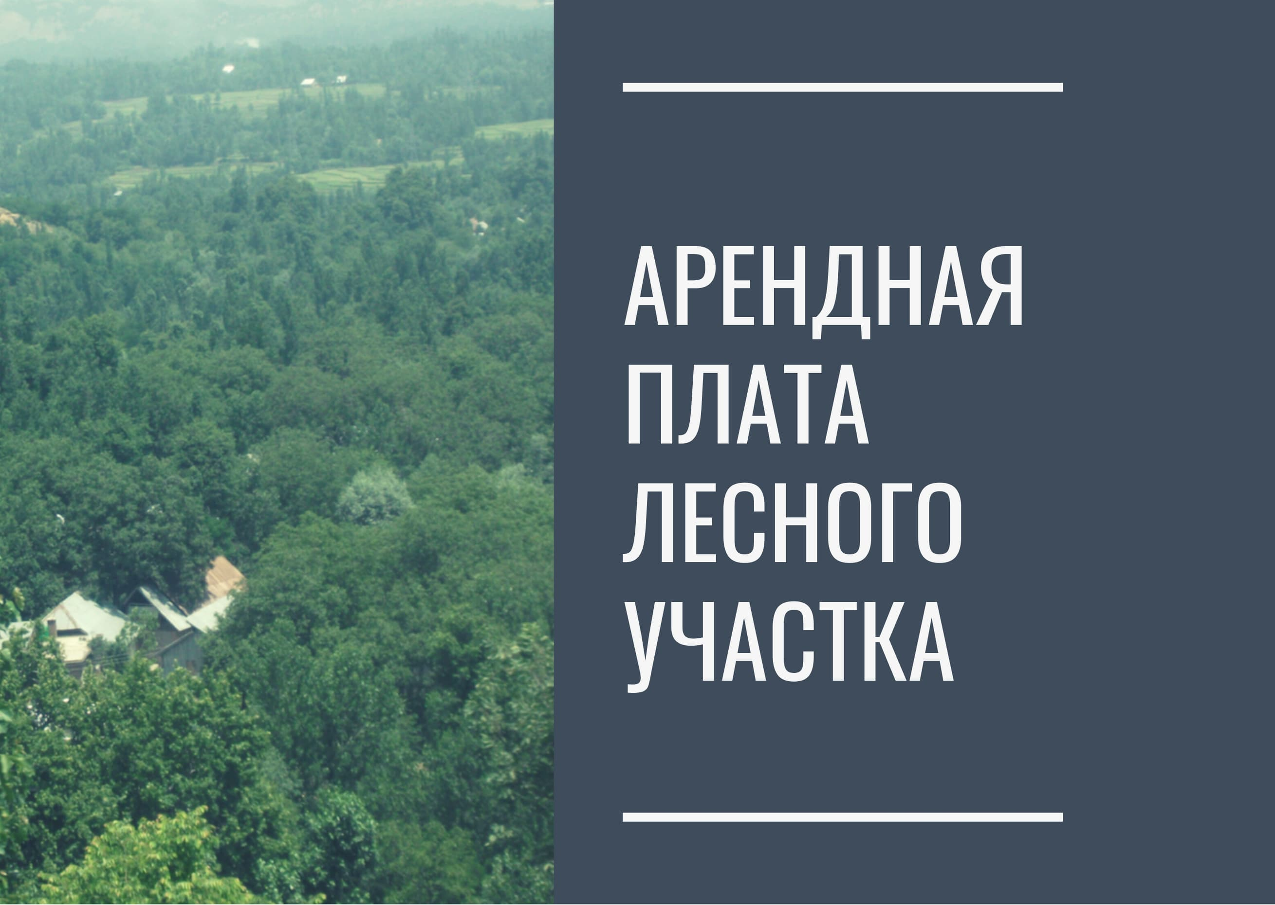 Арендная плата лесного участка