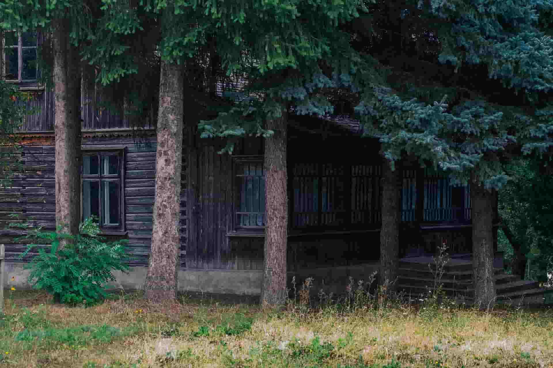 "Аренда лесного участка ""под ключ"""