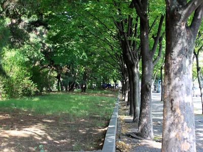 Лесоустройство городских лесов