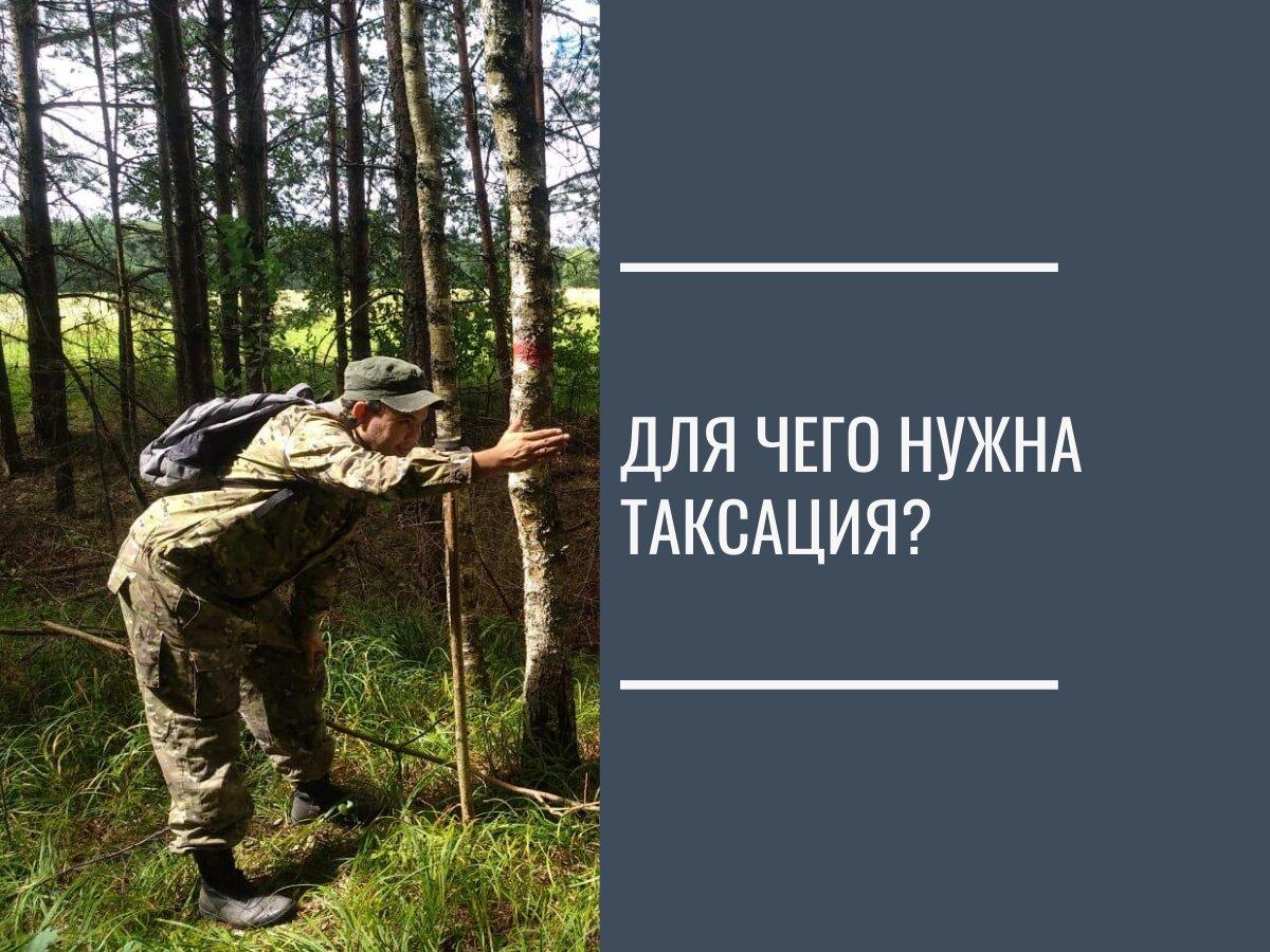Таксация леса это...