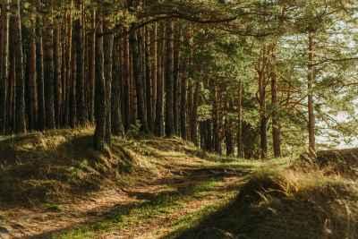 У вашего Проекта освоения лесов вышел срок годности