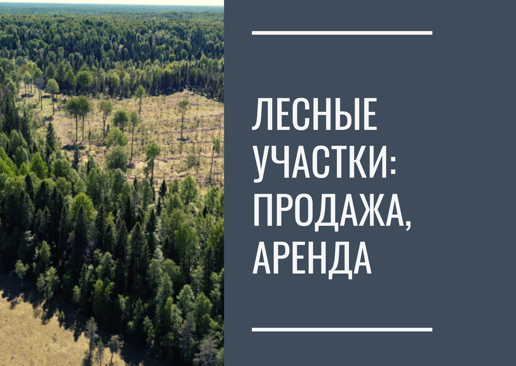Лесные участки: продажа, аренда